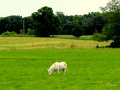 nature, green, horse
