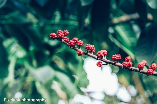 Kostenloses Stock Foto zu frucht, natur