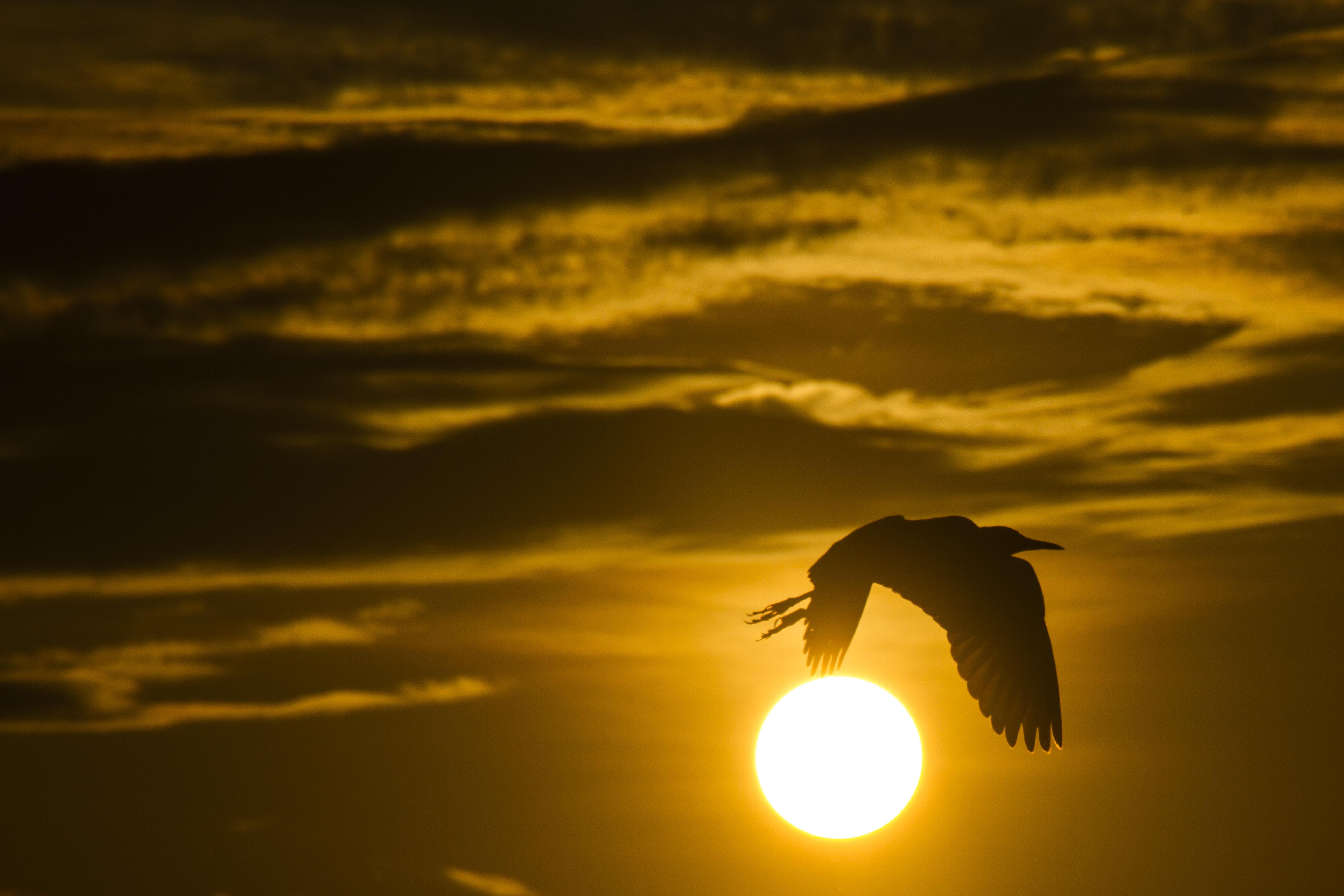 Free stock photo of #bird, #birds, #flight, #forest