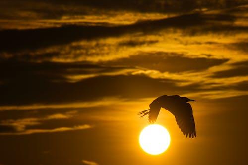 Foto d'estoc gratuïta de # volada, #bird, #forest, #ocells