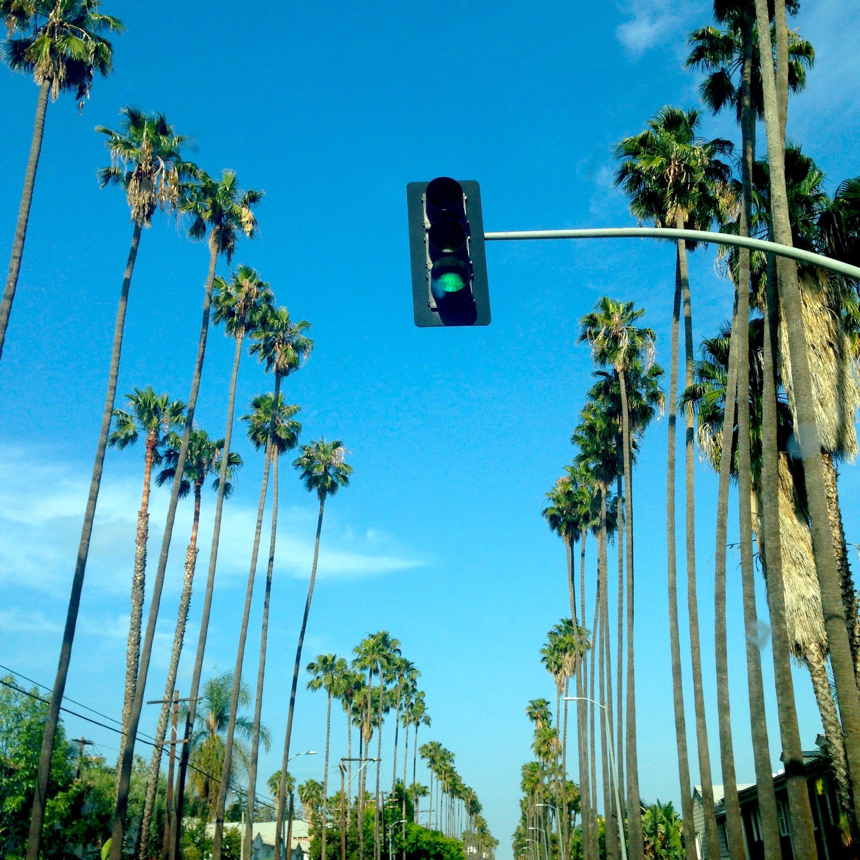 bäume, himmel, perspektive