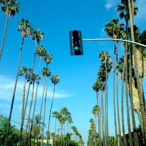 Безкоштовне стокове фото на тему «дерева, місто, Міський, небо»