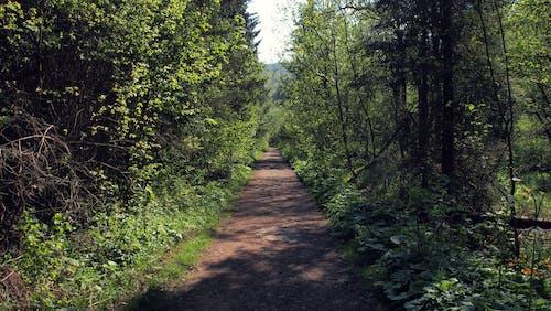 Free stock photo of Bieszczady, forest, green