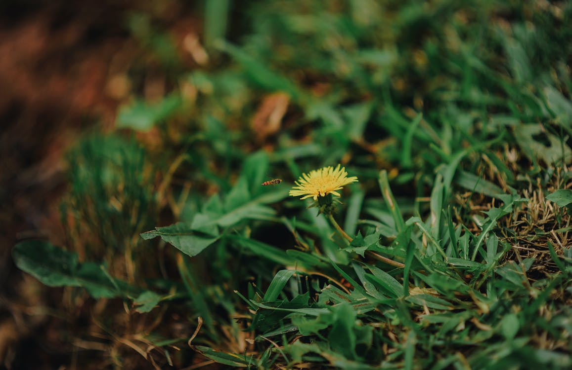 detailný záber, farba, flóra