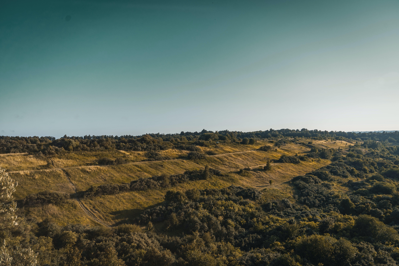 Ingyenes stockfotó domb, erdő, fény, festői témában