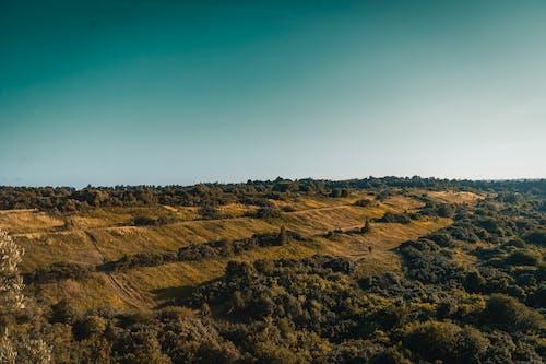 Immagine gratuita di alba, collina, foresta, leggero