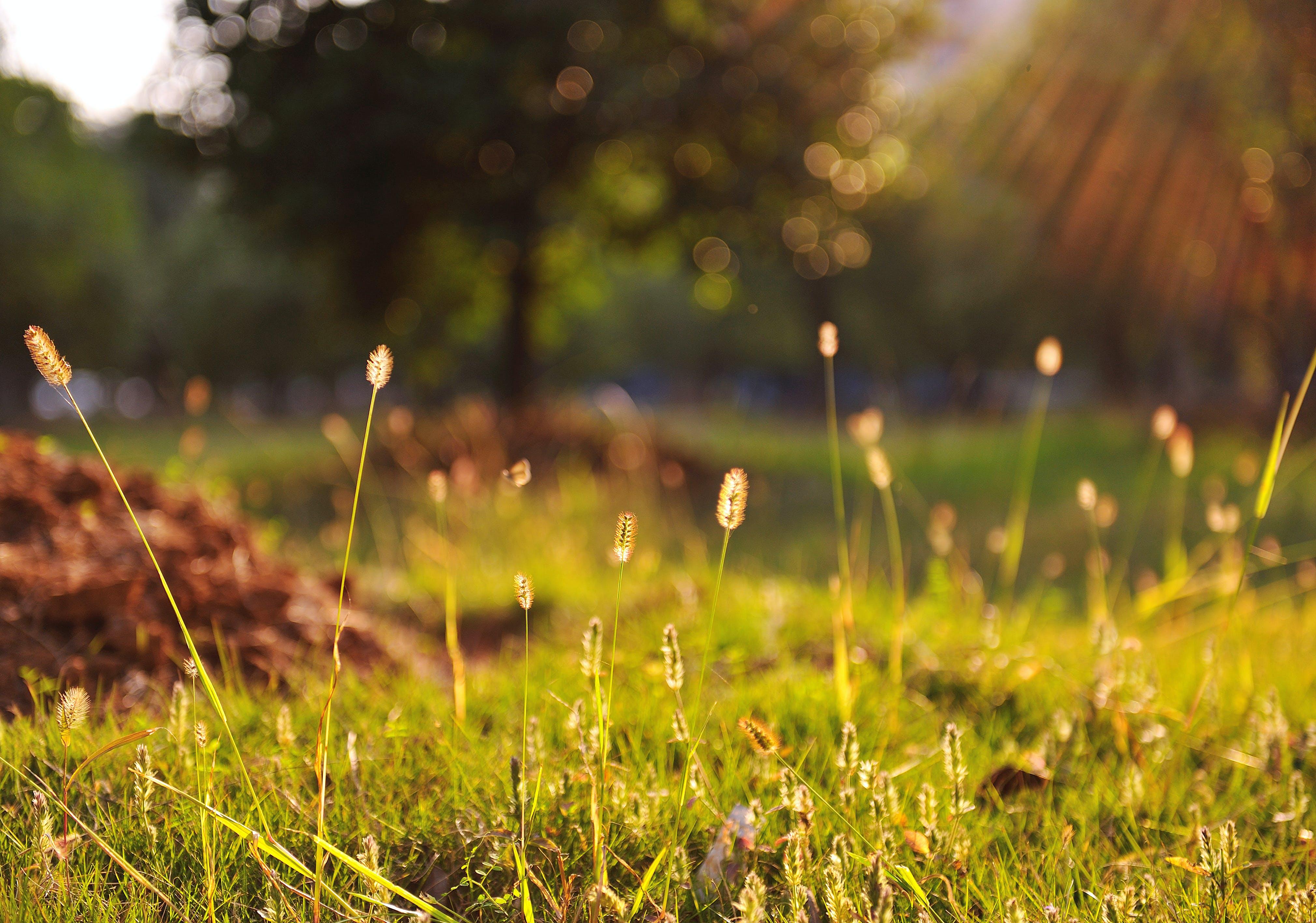 Green Grass during Daytime