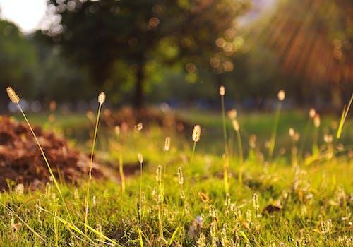Darmowe zdjęcie z galerii z natura, rośliny, słoneczny, trawa