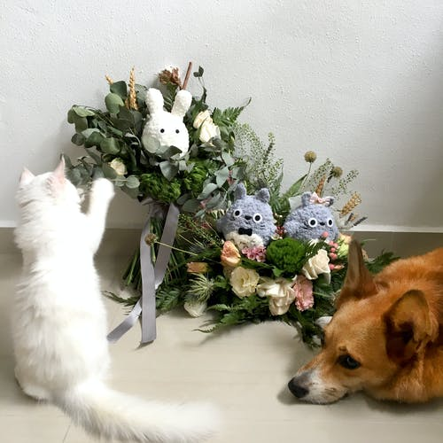 Free stock photo of beautiful flowers, bridal bouquet, cat
