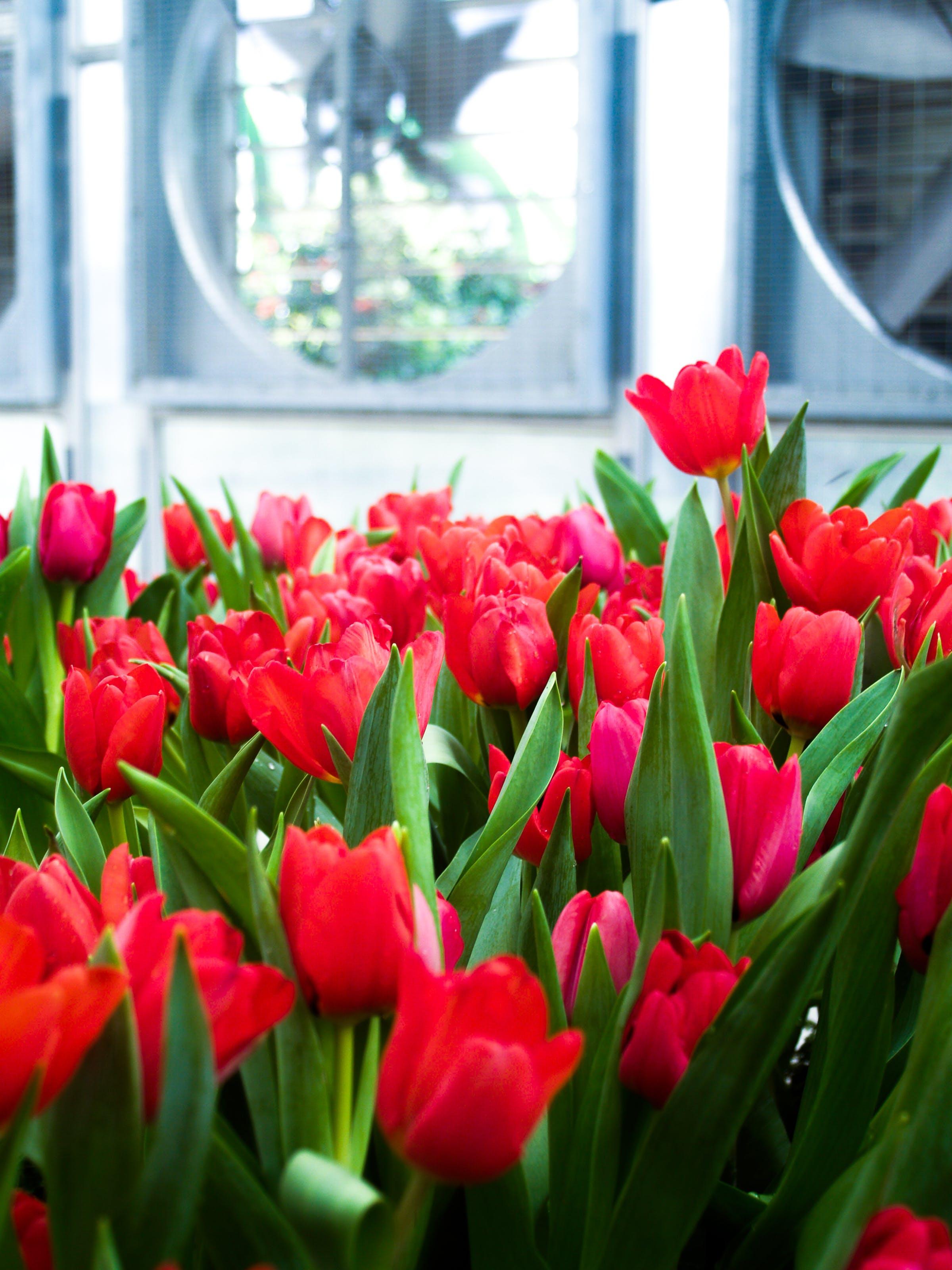 Free stock photo of background, beautiful, beauty, bloom
