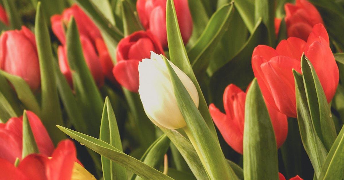 немецкой кухне тюльпаны цветочки картинки этого можете