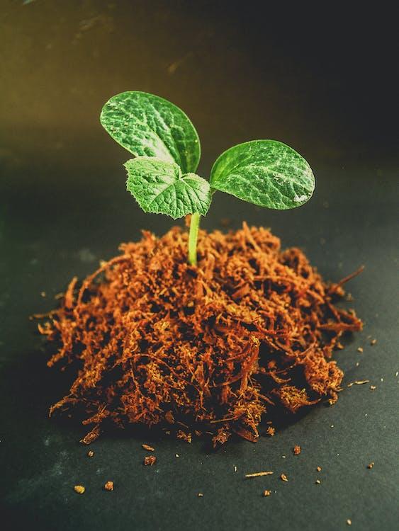 修剪花草, 園藝, 土