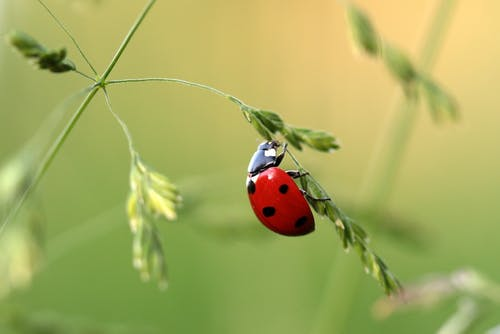 Foto Close Up Ladybug Di Daun Pada Siang Hari