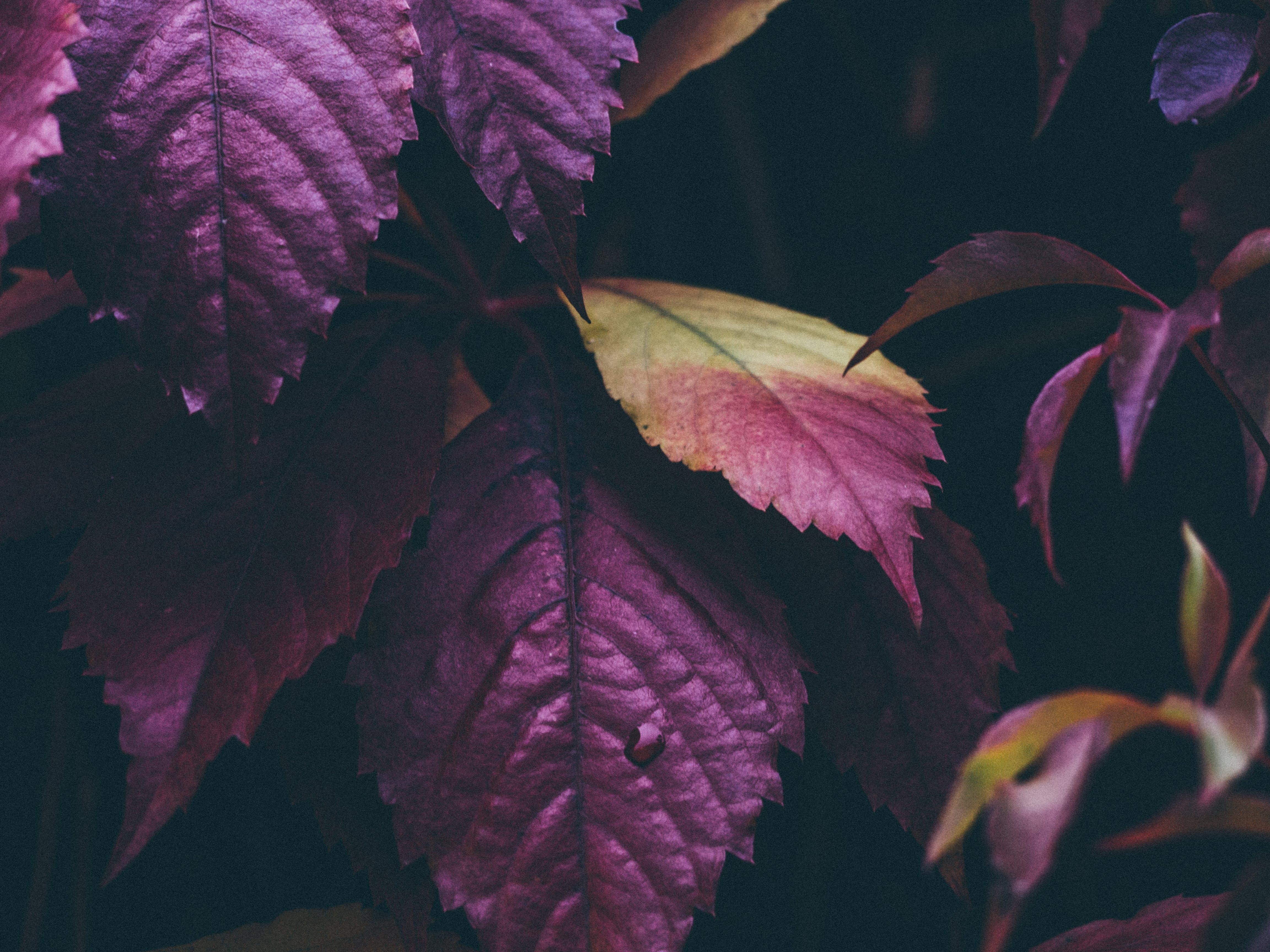 Free stock photo of leaves, autumn, fall, theme-autumn