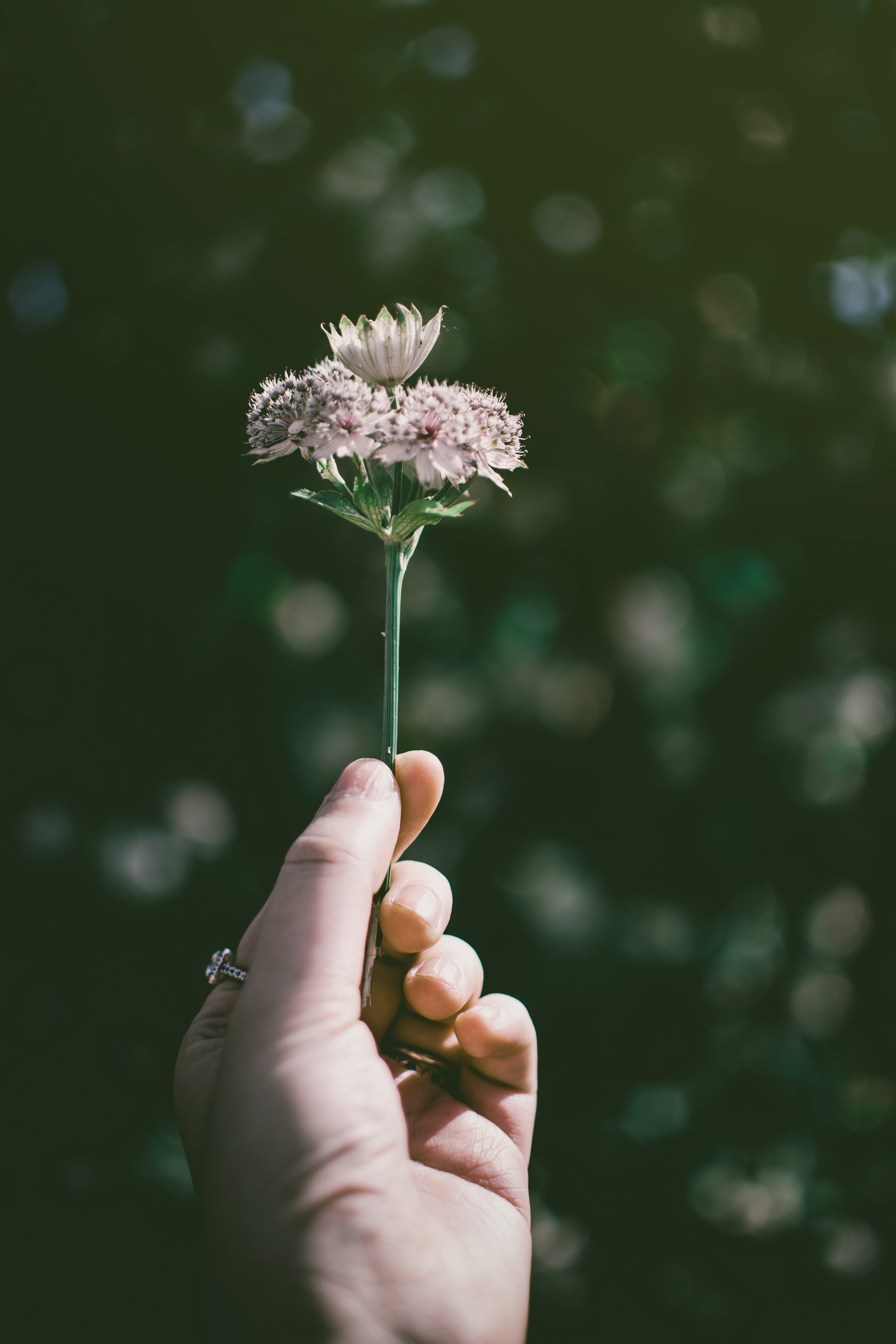 Photo of Hand Holding a Flower