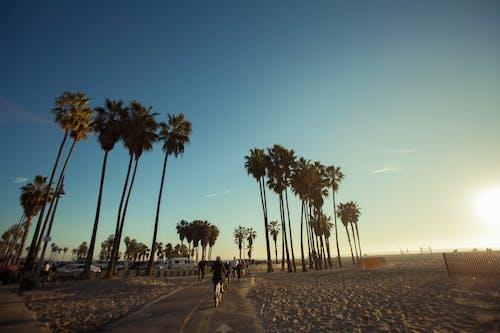 Foto stok gratis matahari keemasan, pantai