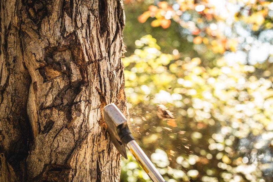 ax, axe, cut a tree