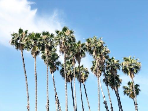Fotobanka sbezplatnými fotkami na tému #palms #sky #nature #moon #cloud #daylight #day