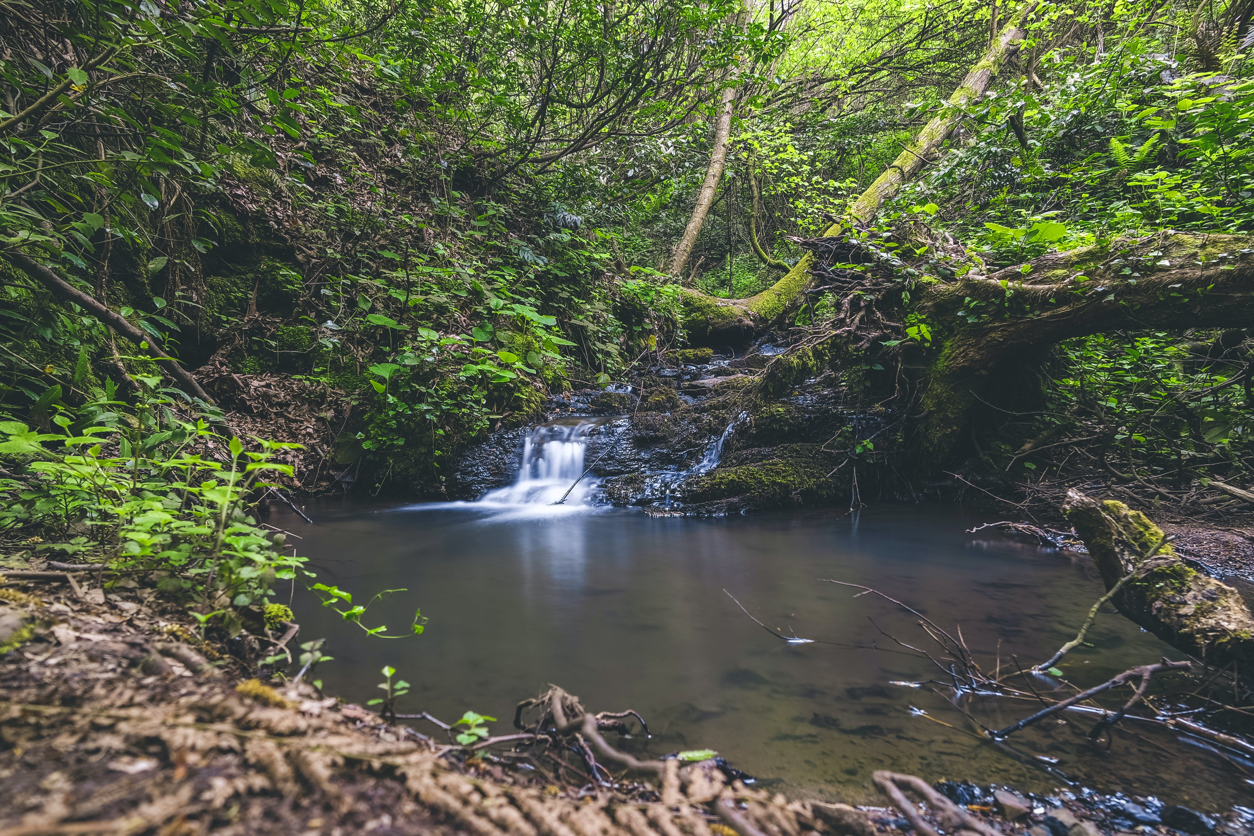 Waterfalls Surrounded With Green Leafed Trees