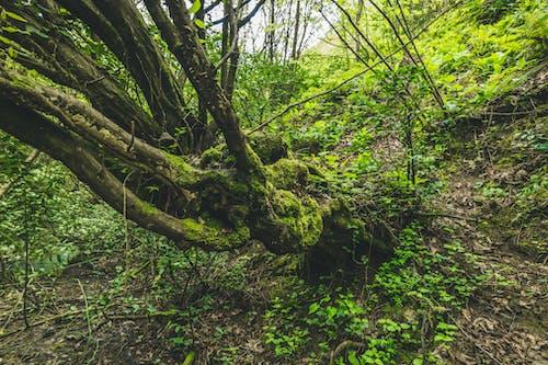 Photos gratuites de arbre, centrales, couleurs, croissance