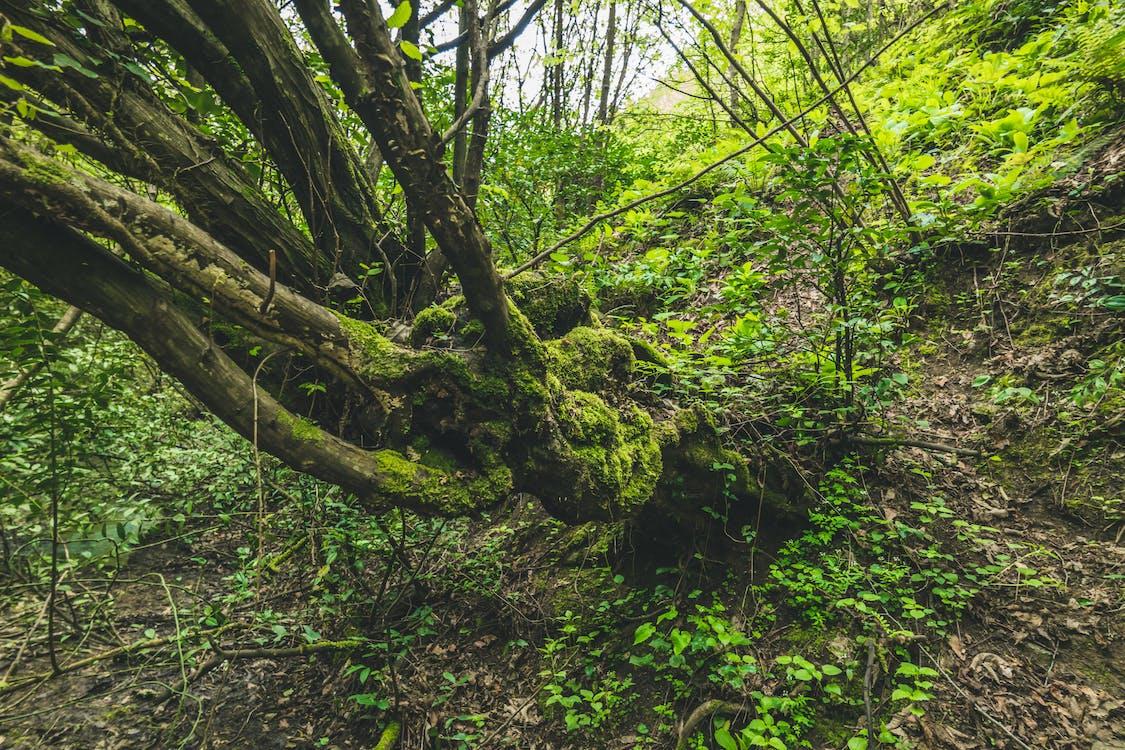 albero, ambiente, boschi