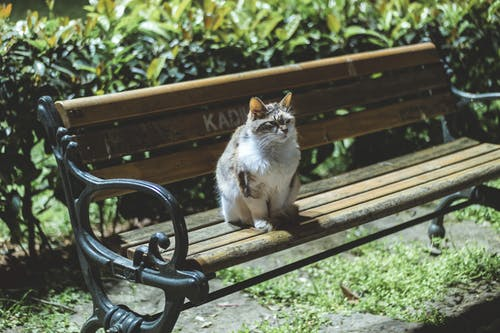 Photo of White and Gray Cat Sitting on a Bench