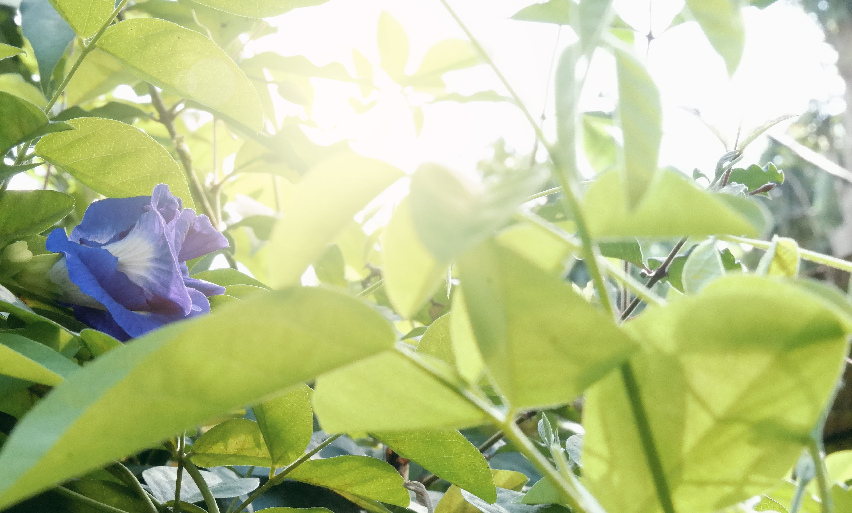 Free stock photo of bali, flower