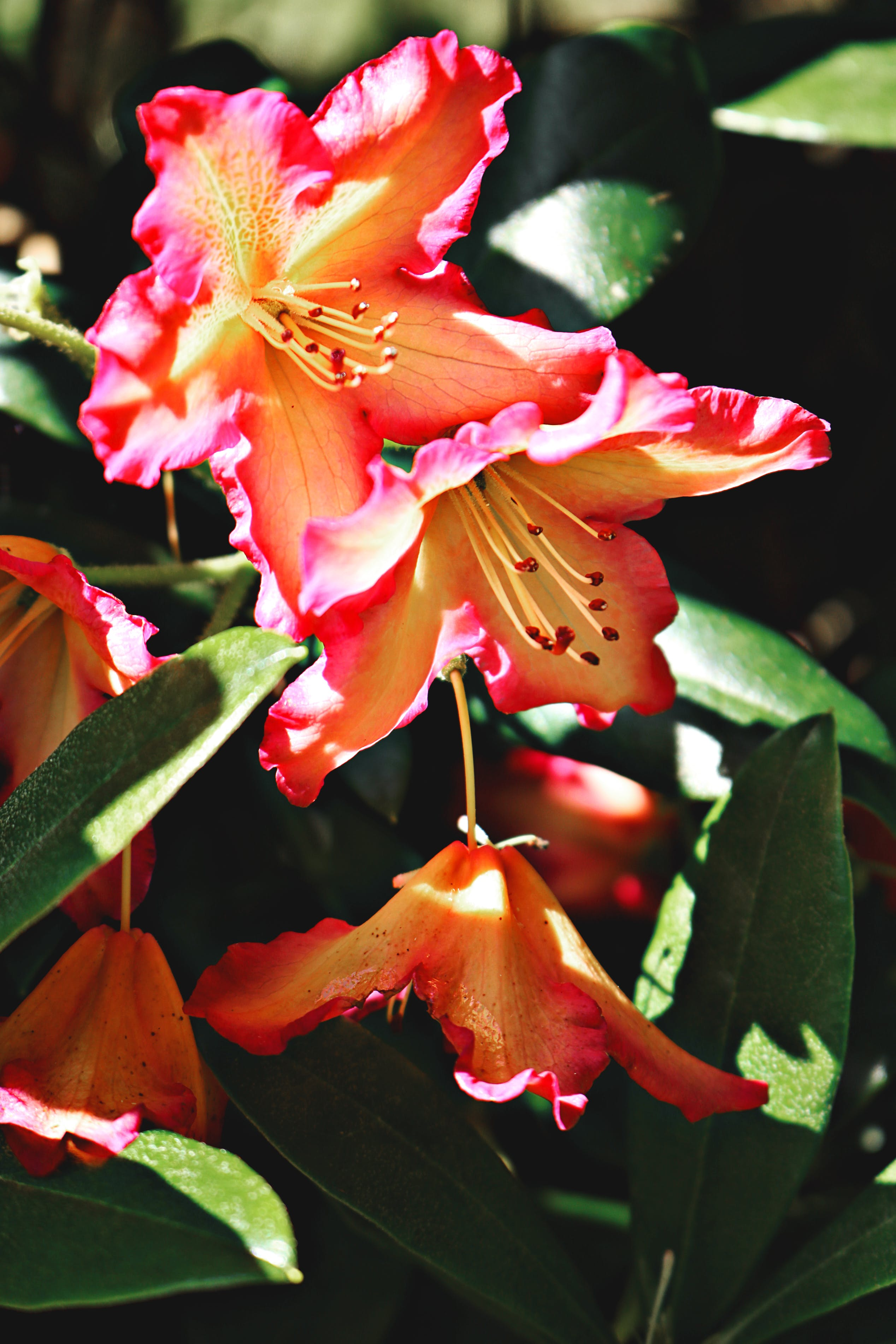 Orange Petaled Flowers Photo