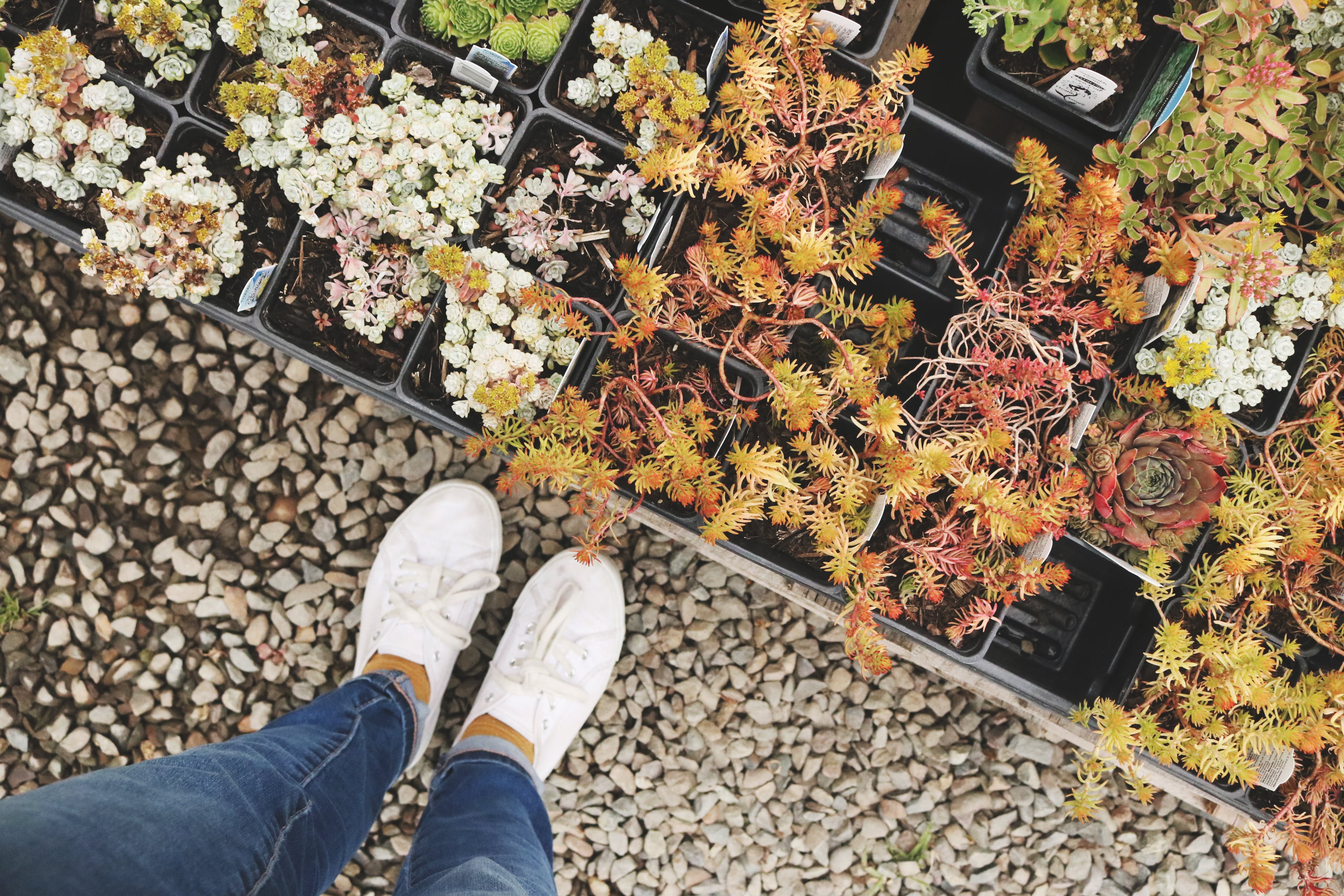 Person Wearing White Sneakers Standing Beside Flowers