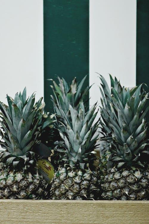 ananas, frisk, frukt