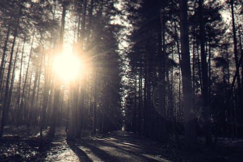 Foto stok gratis alam, cahaya, cuaca, di luar rumah
