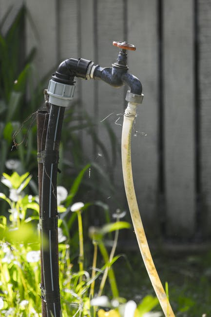 New free stock photo of water, summer, garden