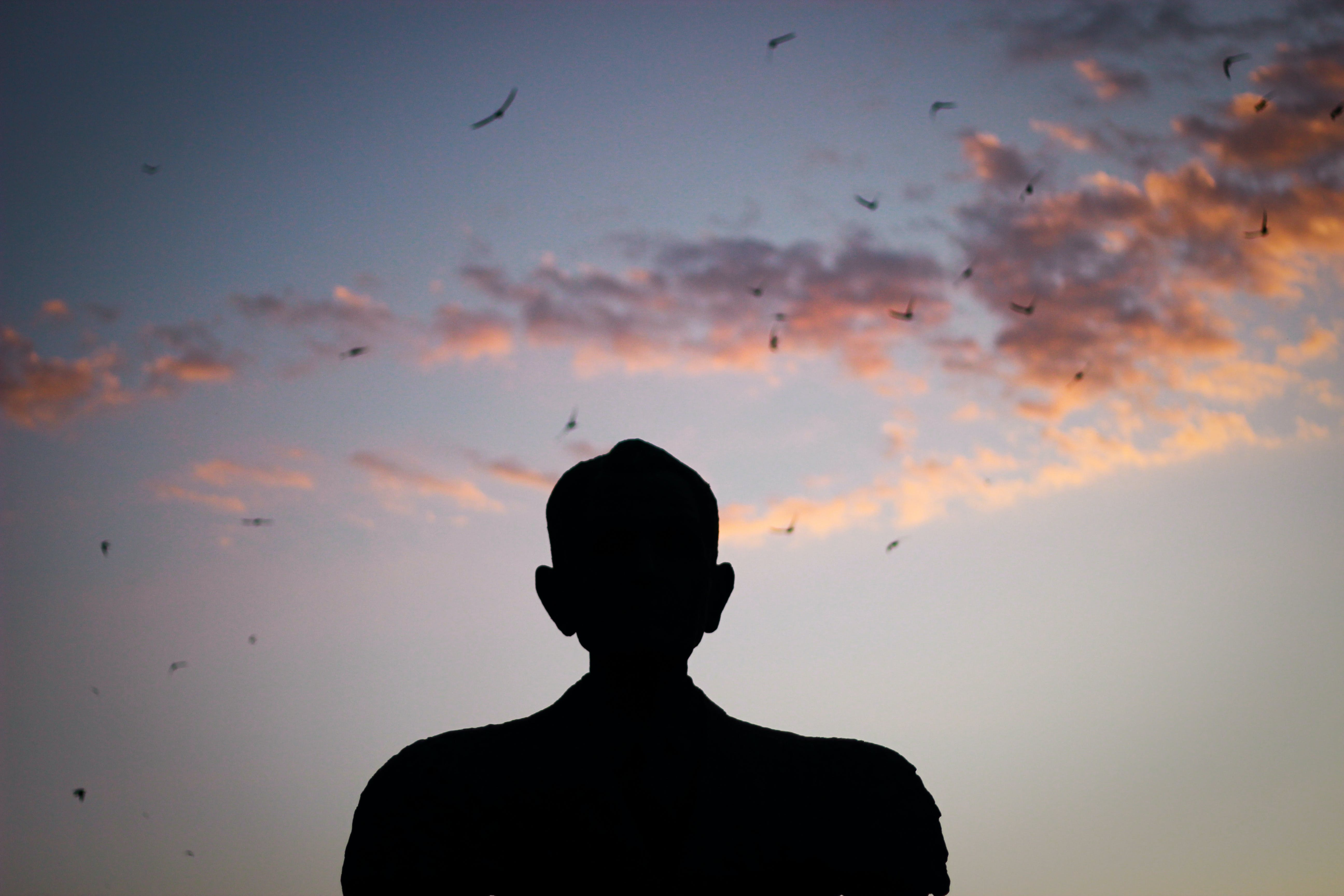 Silhouette of a Man Watching Birds Gliding on the Sky