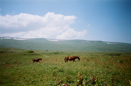 Photo Of Two Horses On Grass Field