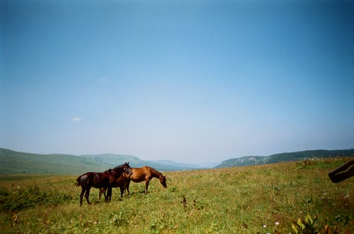 Black And Brown Horses On Grass Field