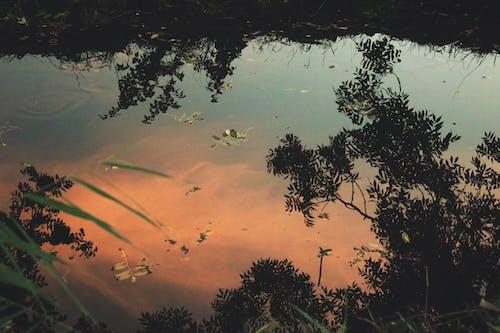 Kostenloses Stock Foto zu farbe in wasser, natur, sonnenuntergang