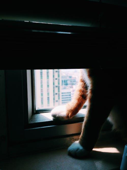 Free stock photo of animal, cat, feline