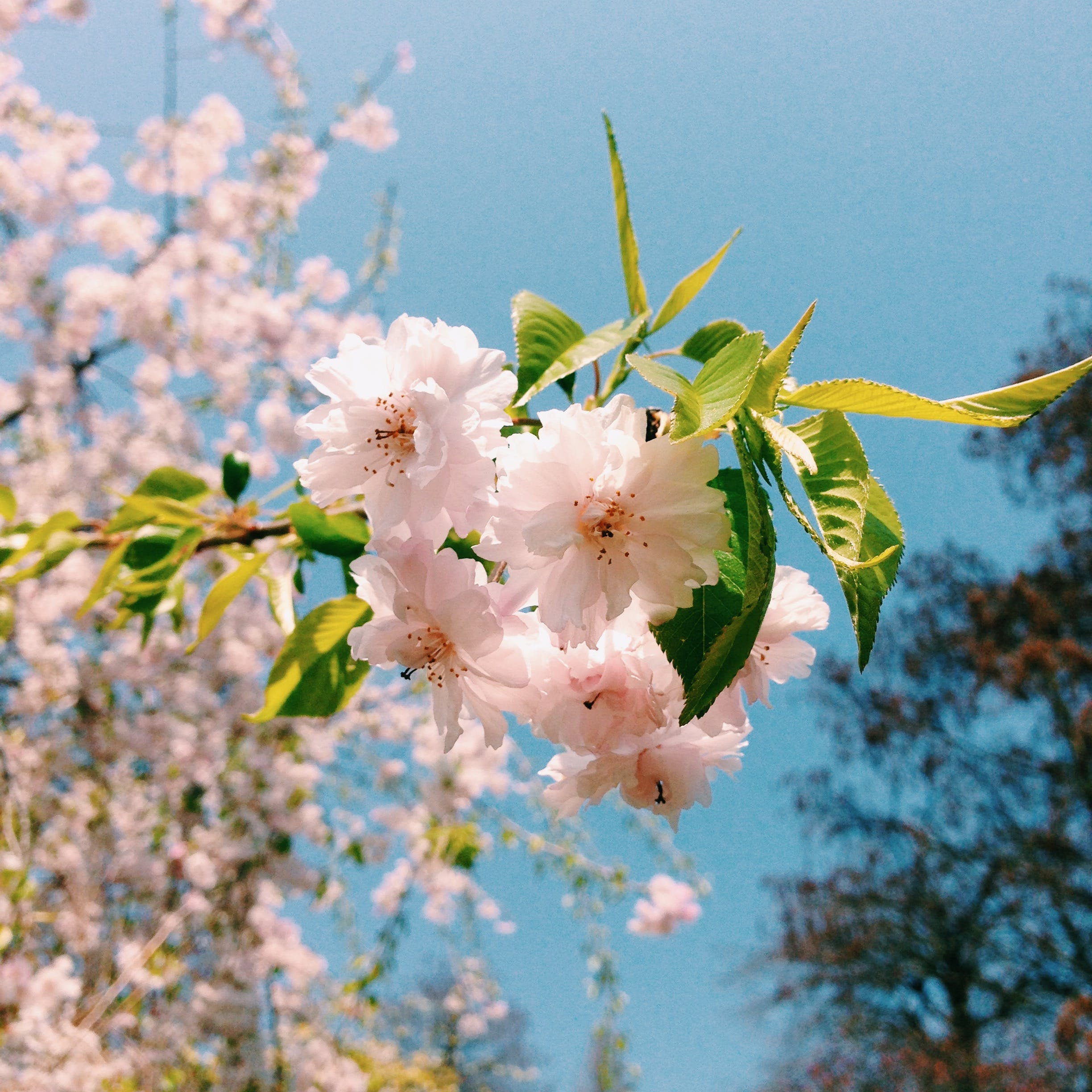 beautiful flowers, blossoms, nature