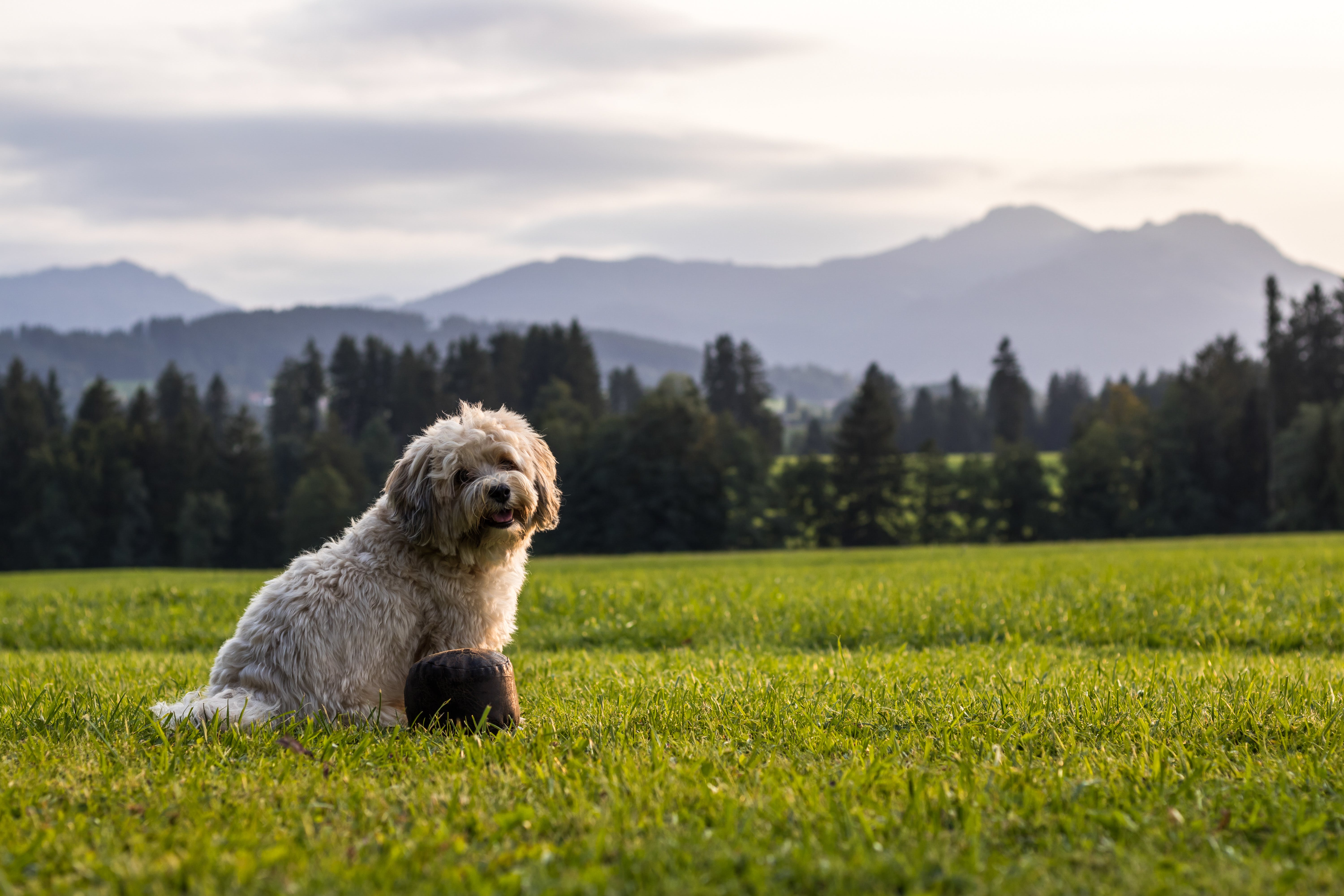 Photography of Dog Sitting on Grass