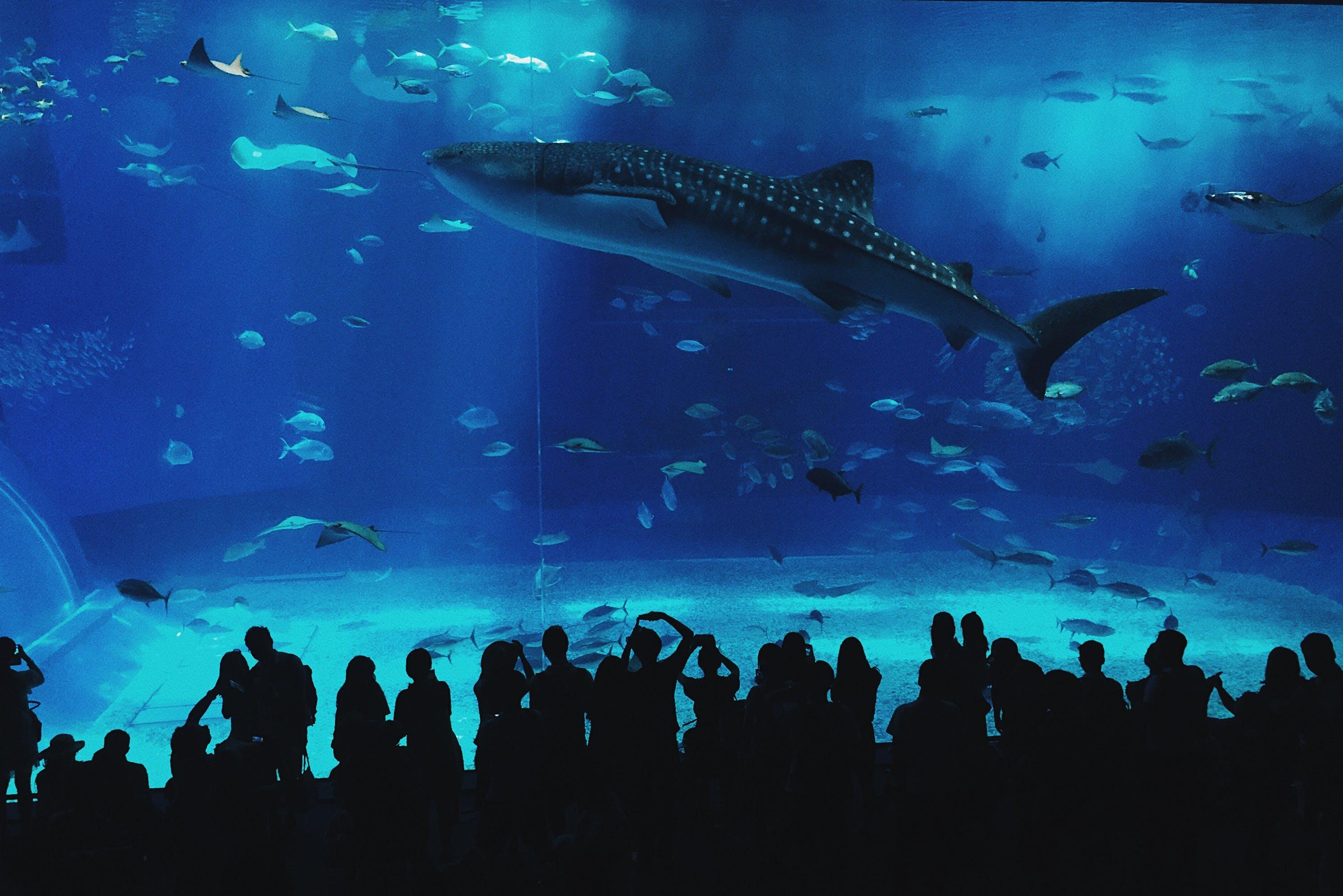 Free stock photo of people, blue, fish, aquarium
