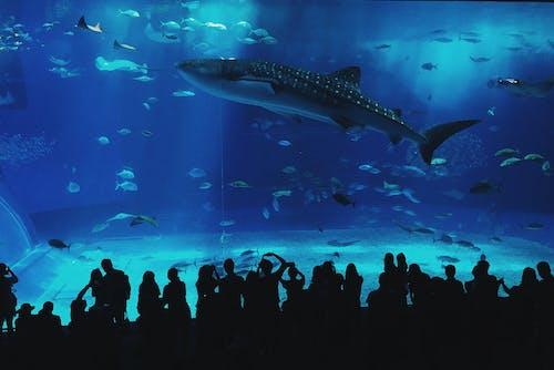 Základová fotografie zdarma na téma akvárium, lidé, modrá, okinawa