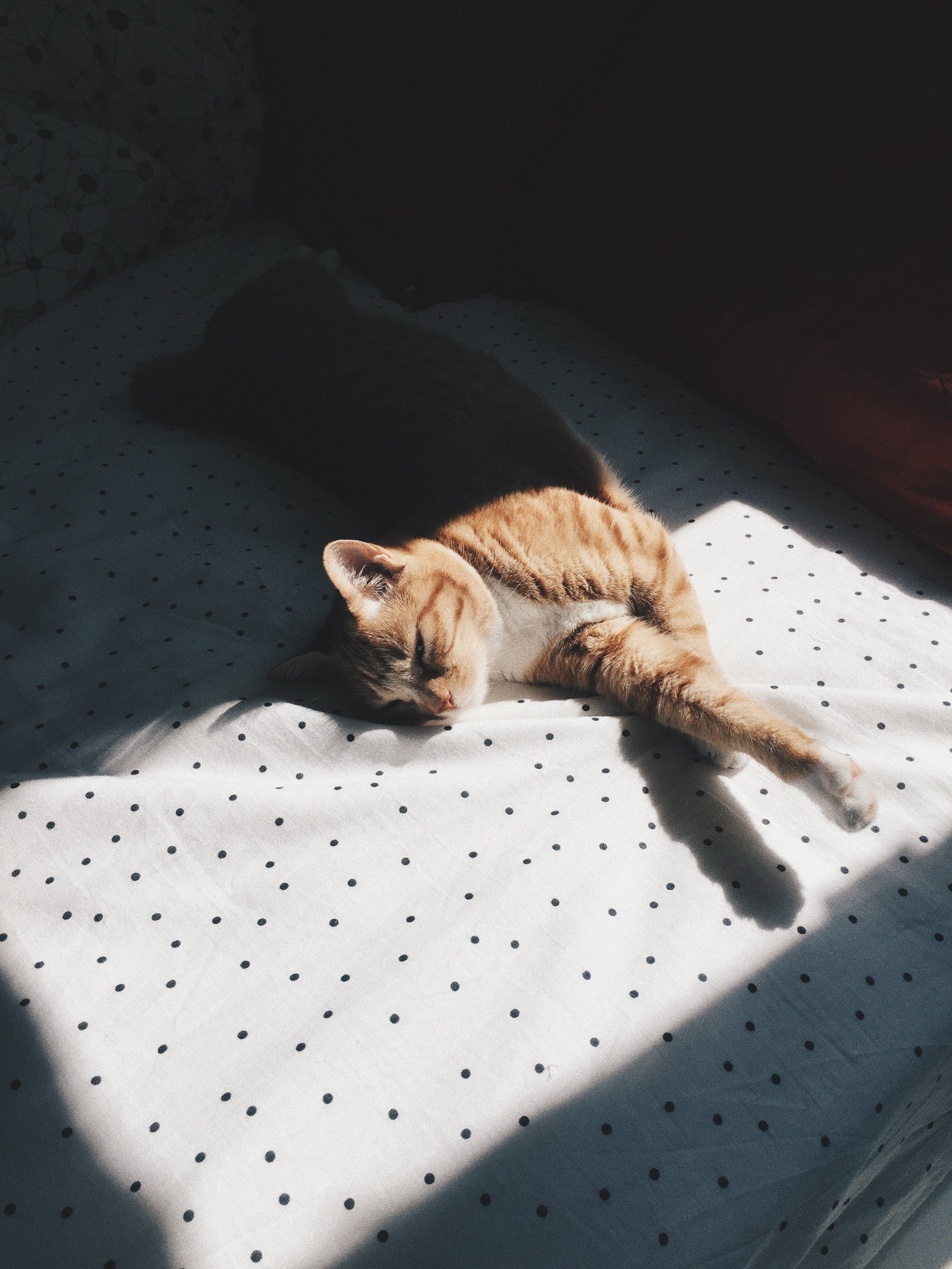 Free stock photo of bed, cat, polka dots, ray of sunshine
