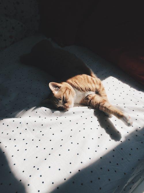 Základová fotografie zdarma na téma kočka, postel, puntíky, sluneční paprsek
