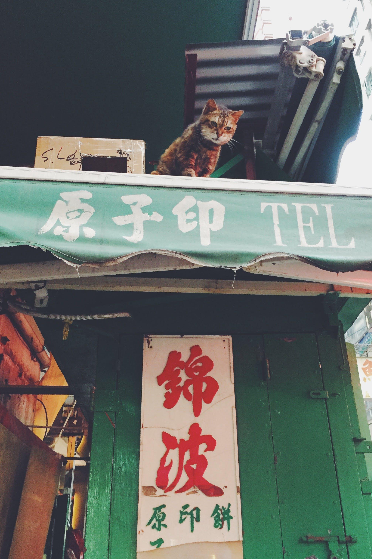 Free stock photo of street, cat