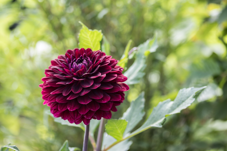 Free stock photo of flower, garden plant, flower garden