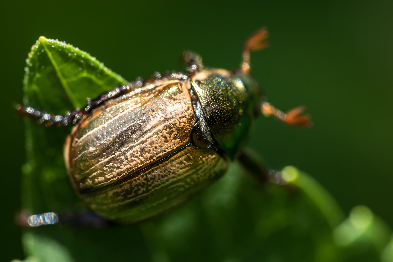 Macro Photography of Beetle on Leaf