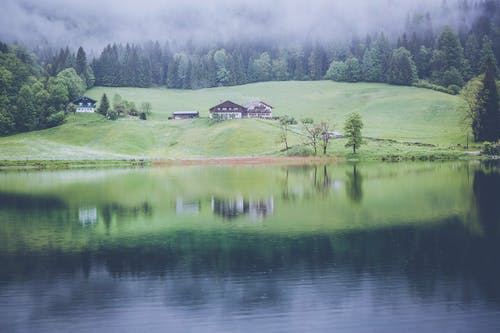 Free stock photo of fog, forest, grass, houses