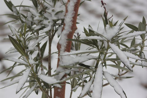 Free stock photo of nature, snow