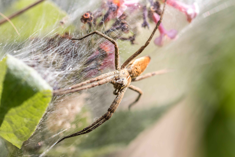 Kostenloses Stock Foto zu spinne, spinnennetz