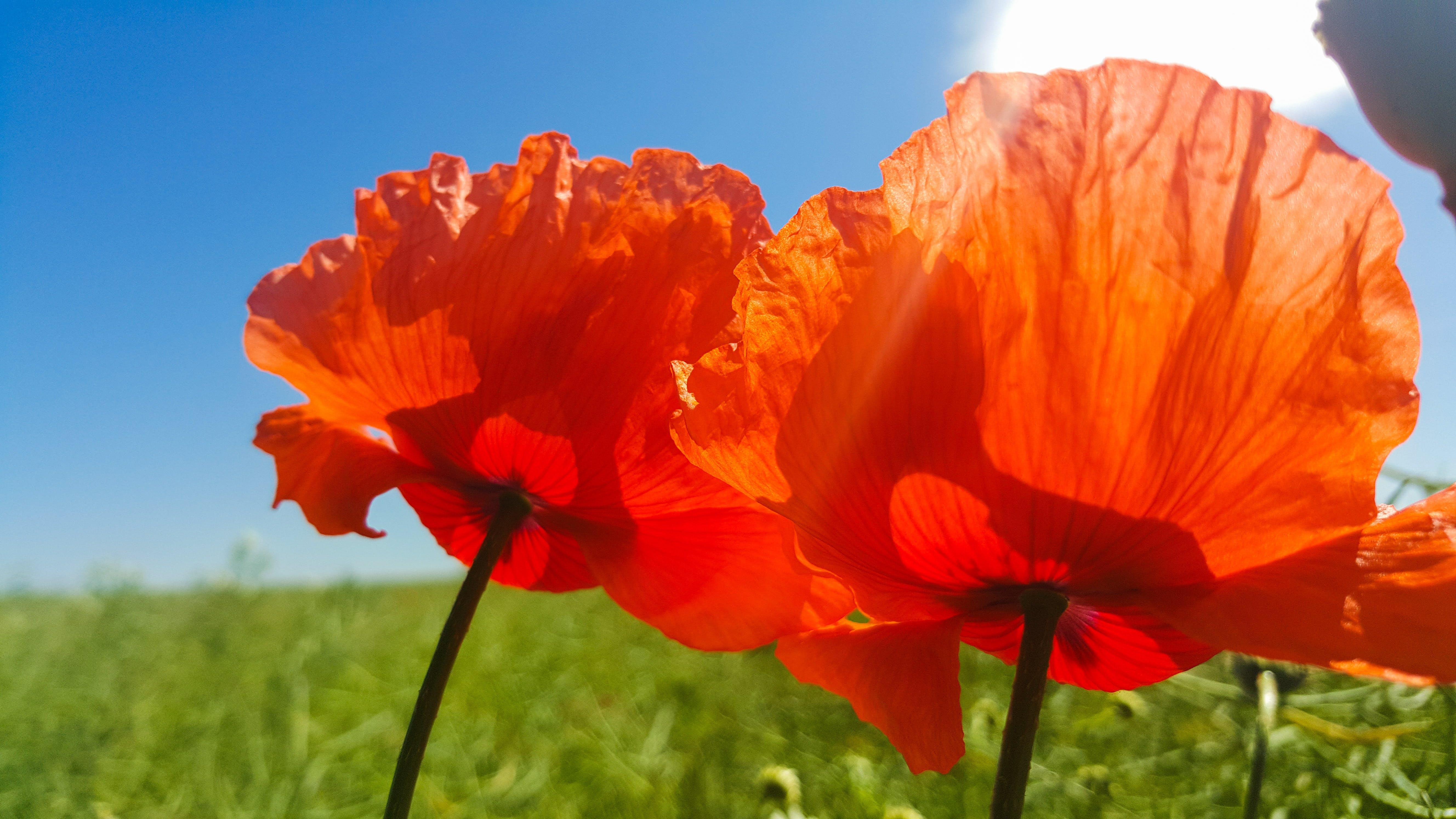 Close Up Photo of Orange Petaled Flower